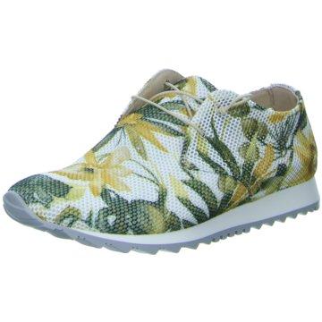 Donna Carolina Sneaker LowGotik bunt