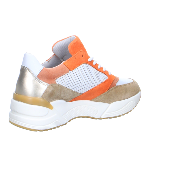 Sneaker World Bullboxer